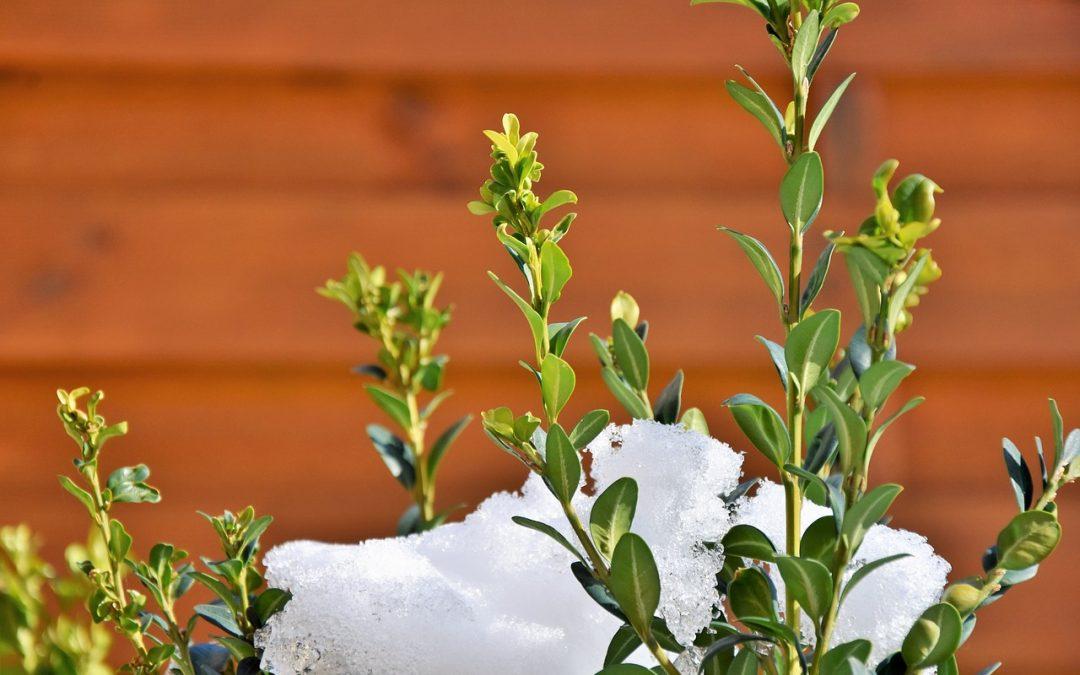 Gartenpflanzen, die auch den Winter überstehen
