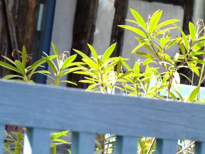 UV-Resistenz von Gartenmöbeln