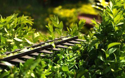 Welche Pflanzen zurückgeschnitten werden müssen