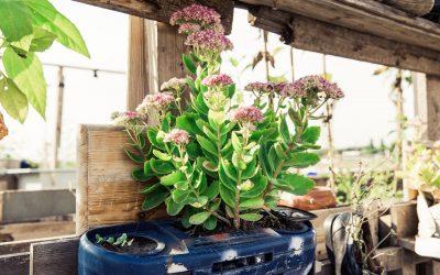 Urban Gardening – eigenes Gemüse in der Stadt