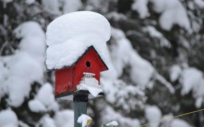 Was wird im Winter aus meinem Garten?