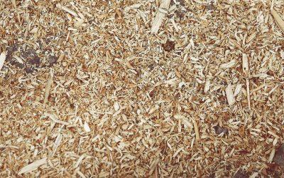 Natürlicher Dünger im Garten – Hornspäne und Hornmehl
