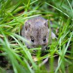Maus muss raus – Die besten Tipps gegen Mäuse im Gartenparadies