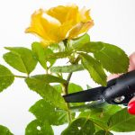 Sicherheit beim Rückschnitt von Bäumen und Sträuchern